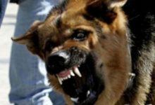 Photo of Что за карантин по бешенству ввели в Сокольниках?»