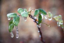 Photo of Во Владивостоке ледяной дождь повредил около 80% зеленых насаждений»