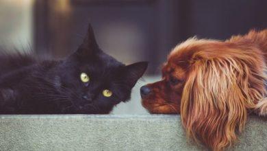 Photo of Надо ли вакцинировать кошек и собак?»