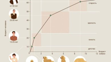 Photo of Сравнение возраста собаки и человека. Инфографика»